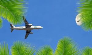 An aeroplane in the blue sky surrounded by palm leaves.
